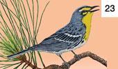 Birding Arizona