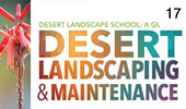 Desert Landscaping and Maintenance